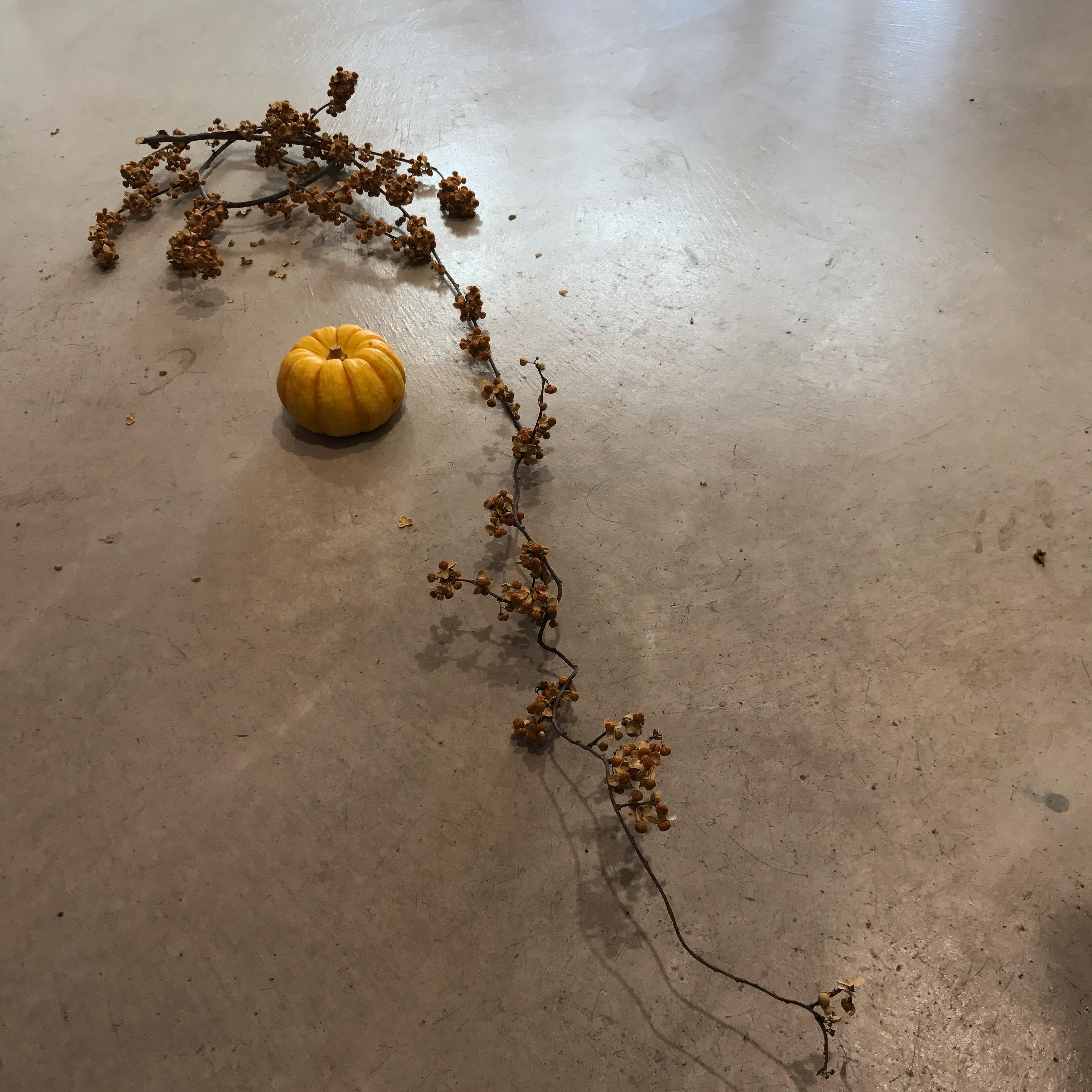 IMG 6633 - Halloween