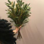 IMG 4718 150x150 - Mimoza Day